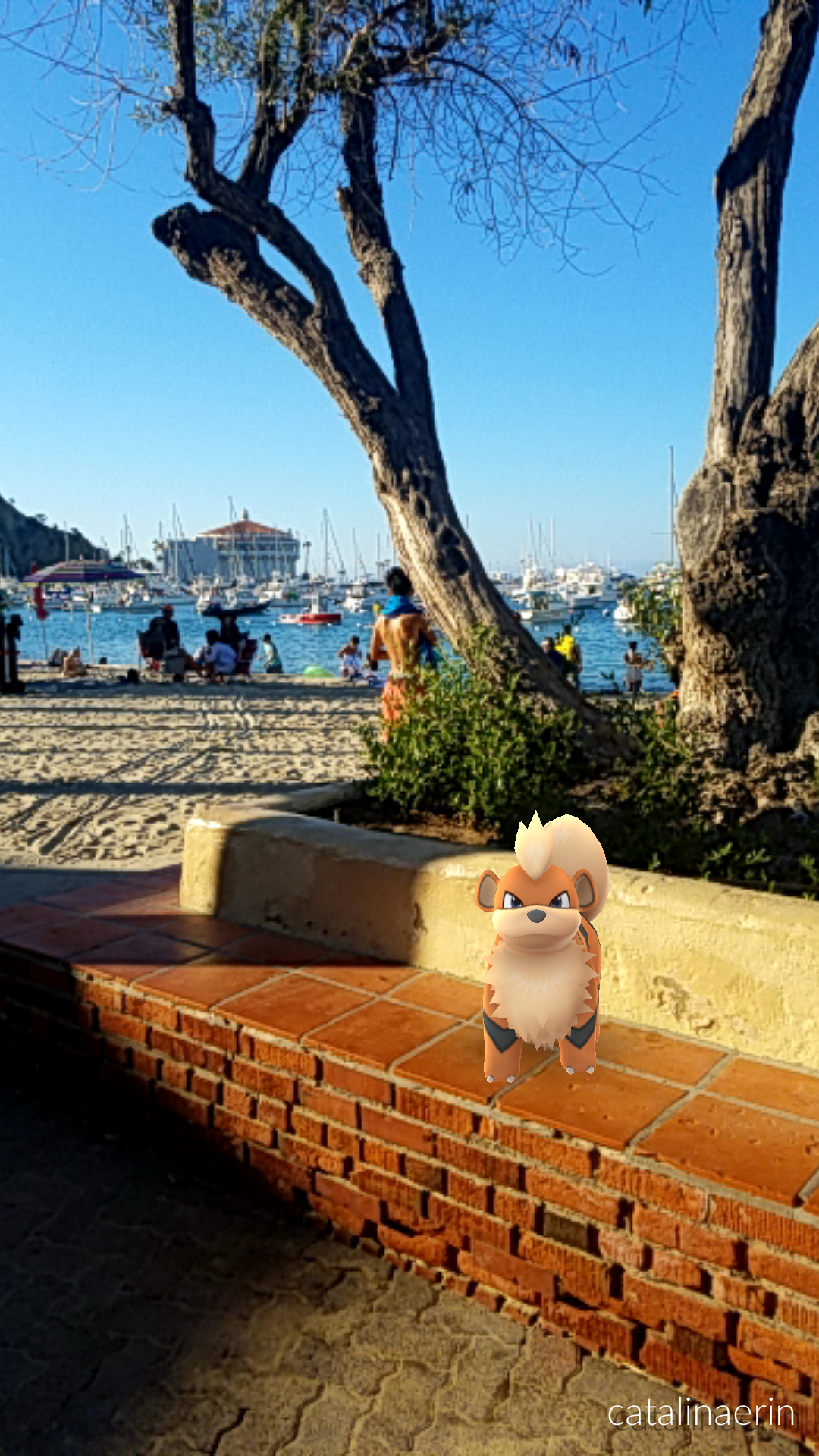 Catalina island pokemon | Catalina Tours Blog | Island tour