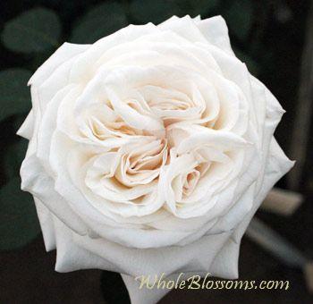 Superb White Wedding Flowers