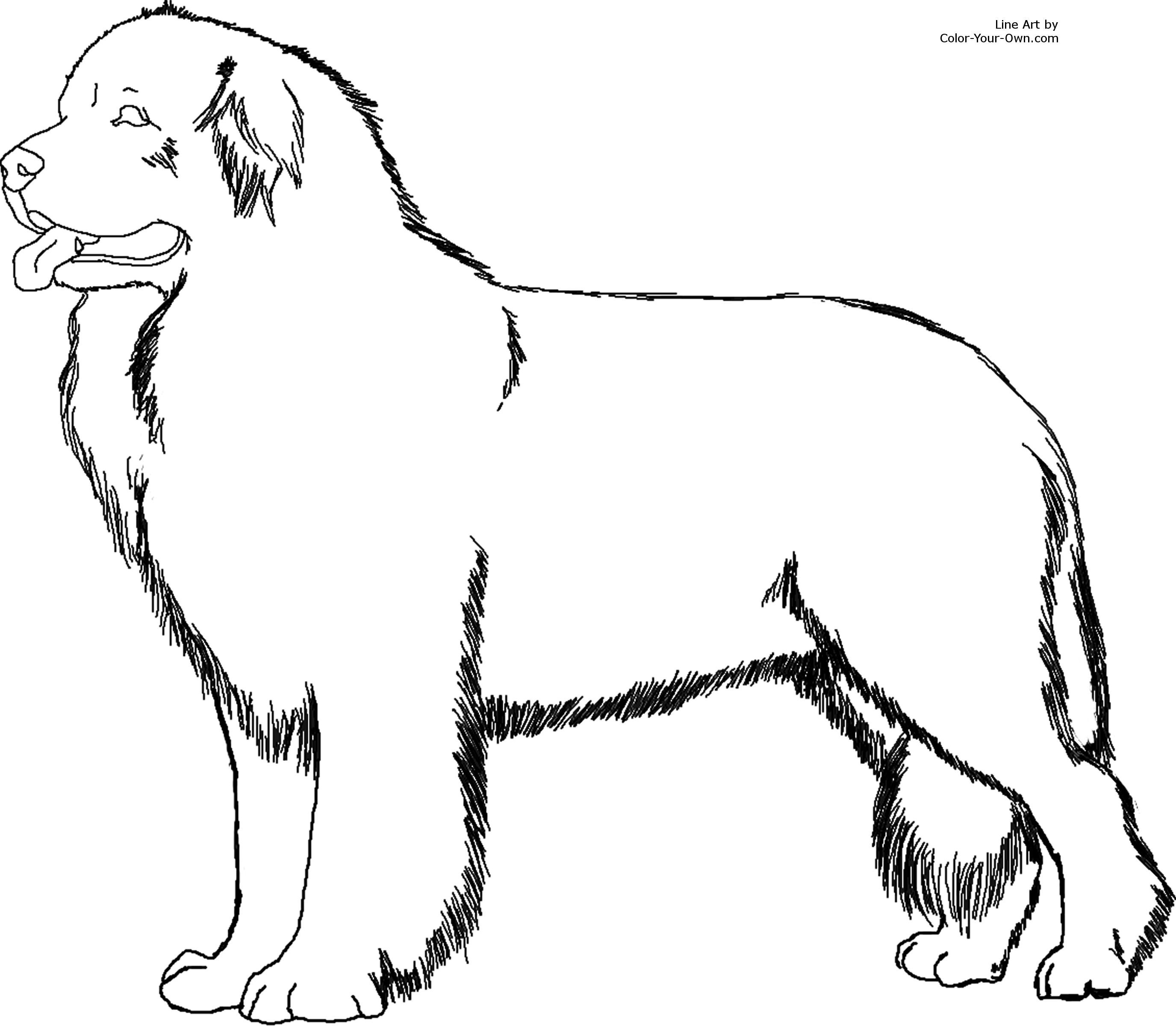 Newfoundland Dog Coloring Page Puppy Coloring Pages Cat Coloring Page