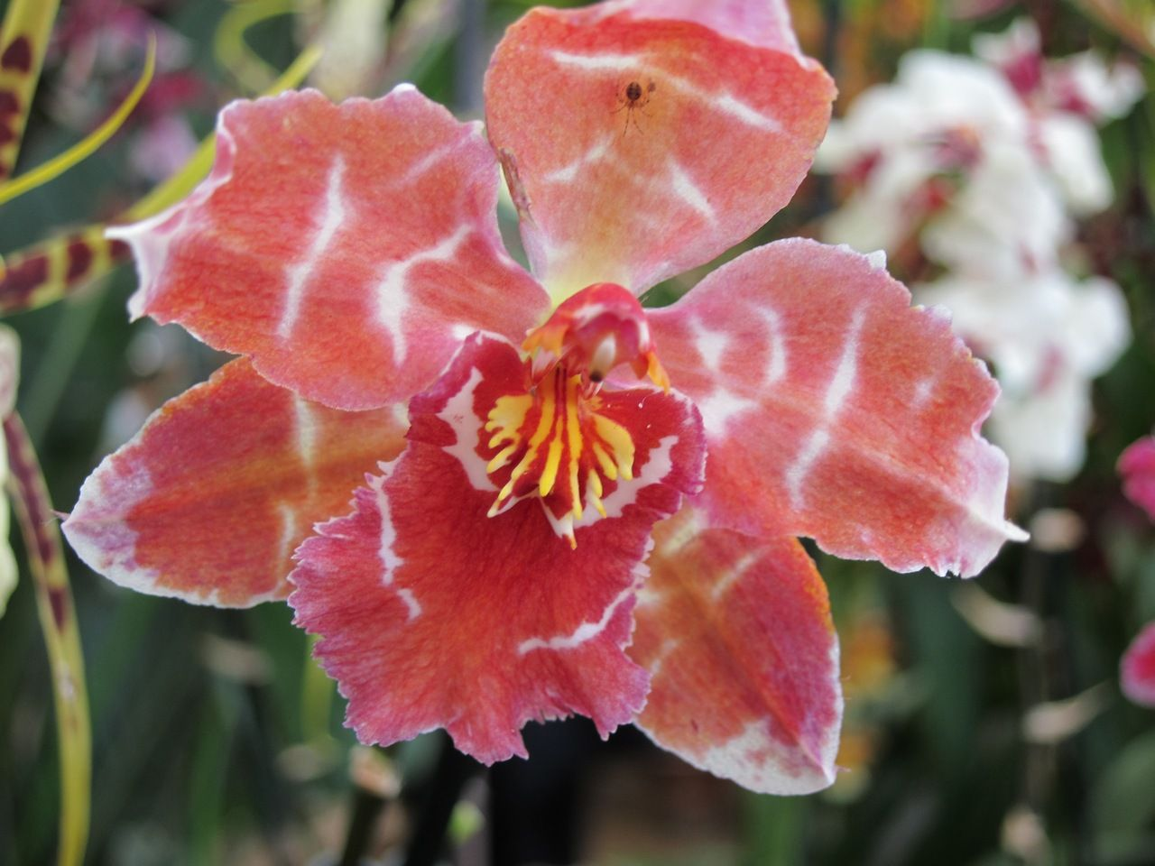 Exoticorchids Rare Pink Orchid Comment Popular Pics Click Any