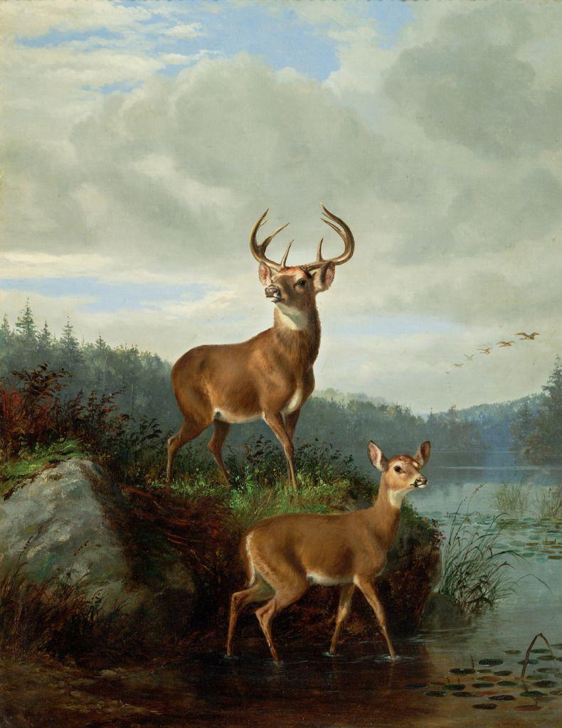 330 Deer Paintings ideas   deer, deer painting, wildlife art