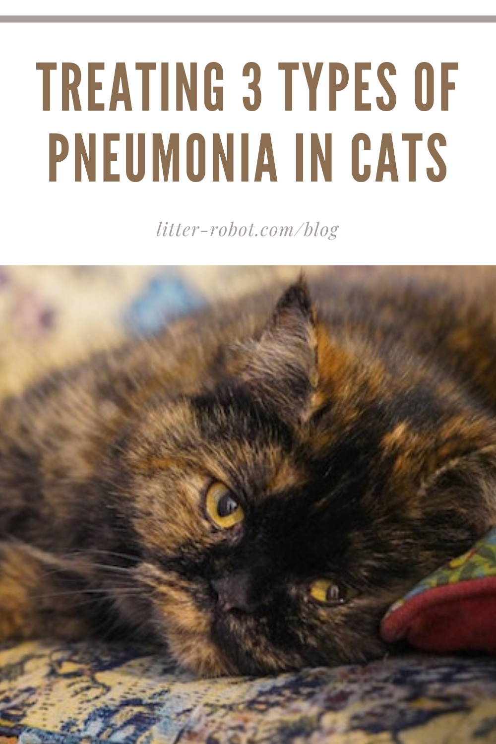 Treating 3 Types Of Pneumonia In Cats Litter Robot Blog In 2020 Pneumonia Fungal Pneumonia Cats