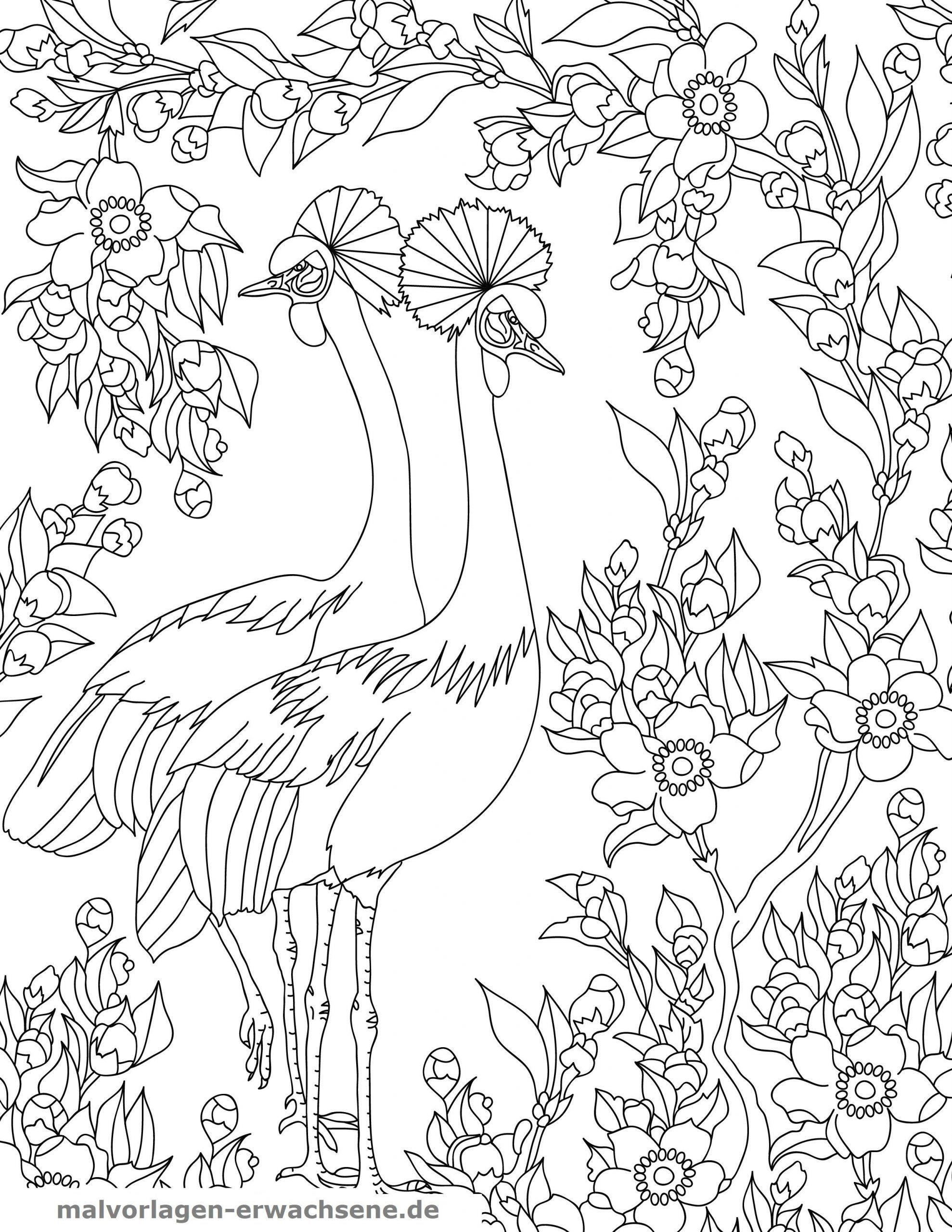 Malvorlagen Vogelchen
