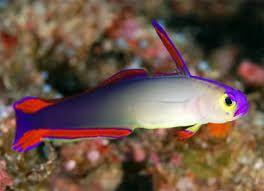 Resultado de imagen para peces hermosos del mar