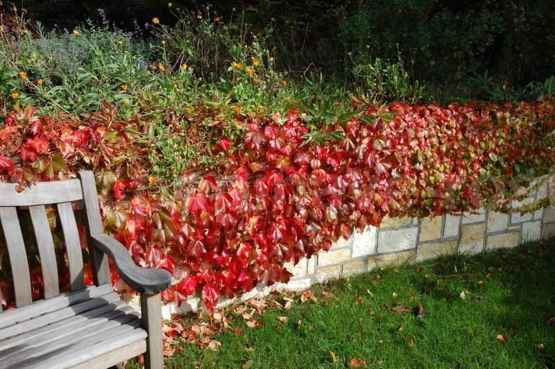 Popinave vino na plot okolo zahrady. Klidne i nejakou hodne barevnou odrudu. Nejen hezky vypada, ale i dobre chutna.