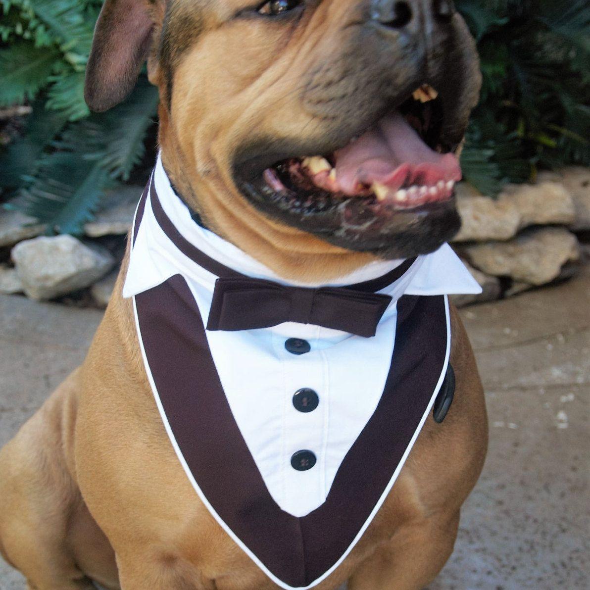 Dog Tuxedo, Pet Wedding Clothes, Pet Formal Wear, Tuxedo Dog ...