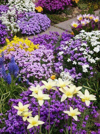 Purple Yellow White Flower Garden Purple Flowers Garden Purple Garden Flower Garden