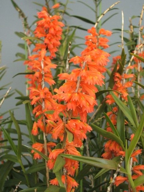 Pin Di Orchids