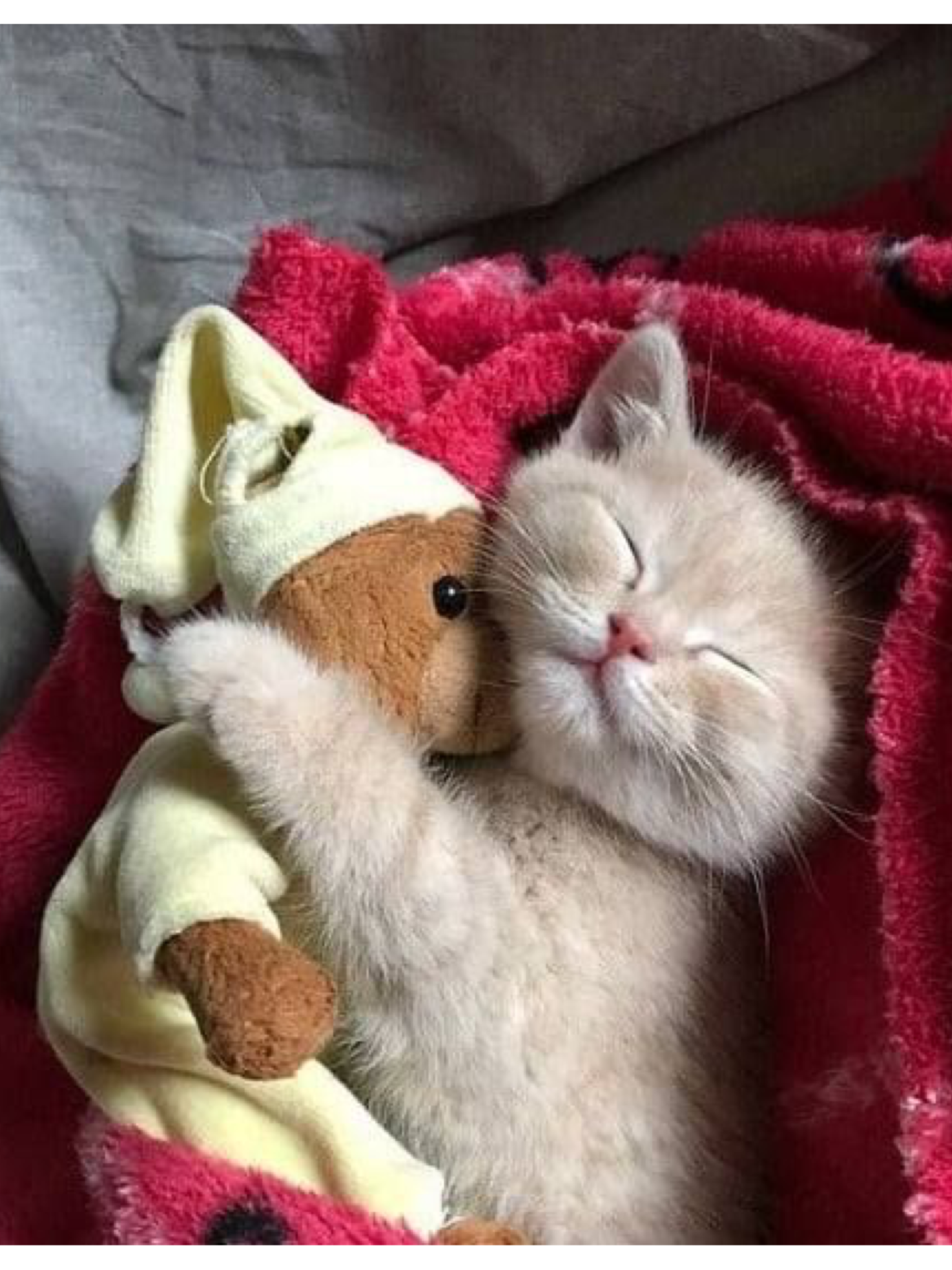 Everyone Loves A Teddy To Snuggle With Kittens Cutest Cute Animals Cute Cats