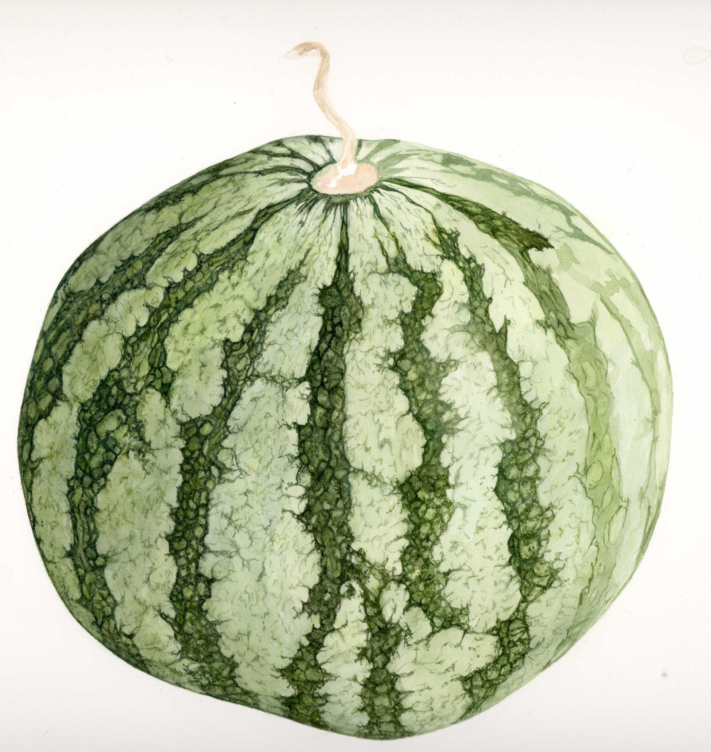 13++ Melon facade information