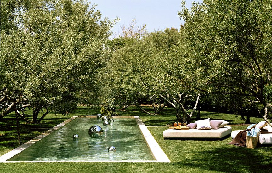 pool / back yard orchard