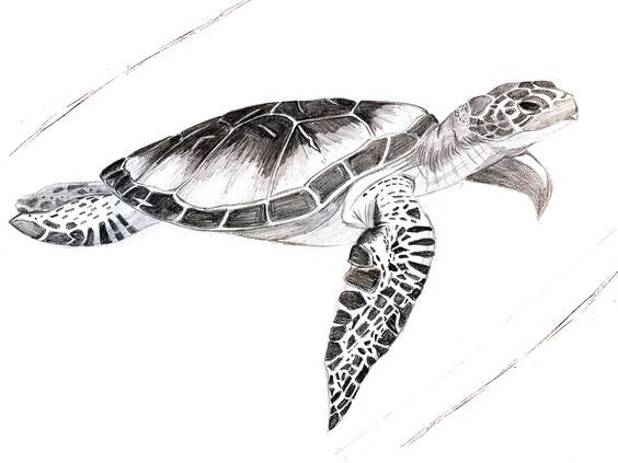 Related image | Turtle tattoo, Sea turtle tattoo, Hawaiian ...