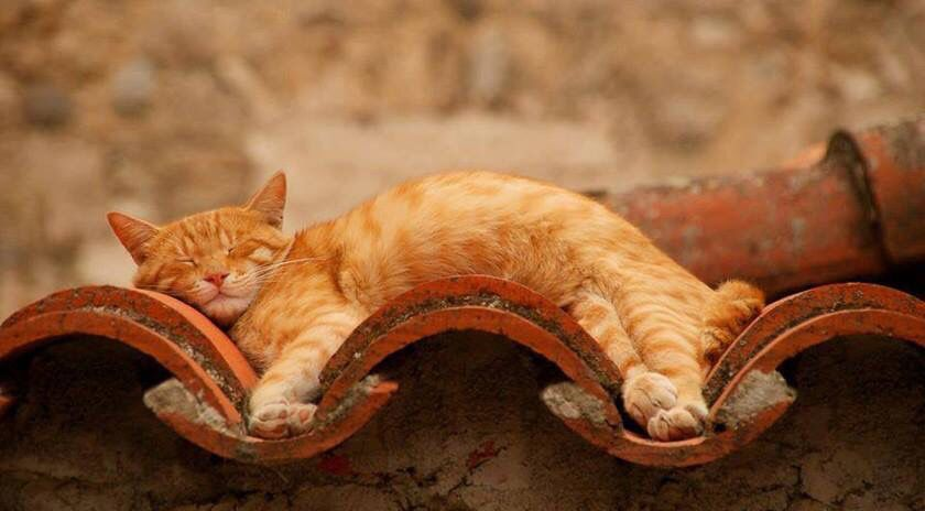 """""""Mas o gato quer ser só gato"""". (Neruda)     ♡"""