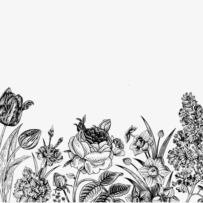 Free Flower Sketch Pull Material Sketch Black And White Flowers Png Transparent Clipart Image And Psd File For Free Download Flower Sketches Black And White Flowers White Flower Png