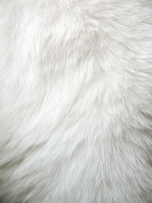 Pin By Yifen Wang On Texture O White Texture White Fur
