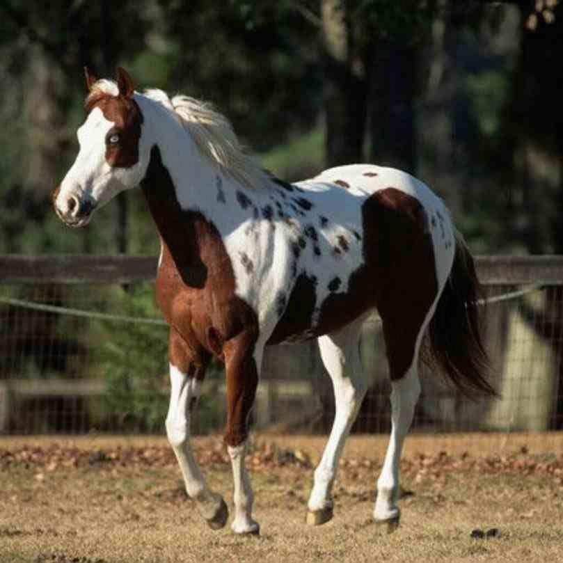 20 Chevaux Qui Possedent Les Robes Les Plus Exceptionnelles Qui Existent Beaux Chevaux Animales Et Painted Horses