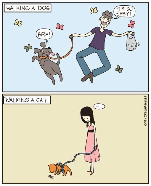Walking A Dog Vs Walking A Cat Cat Vs Human Dog Comics Funny