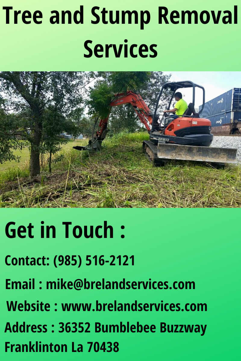 cheap tree removal near me on tree and stump removal services stump removal removal services how to remove pinterest