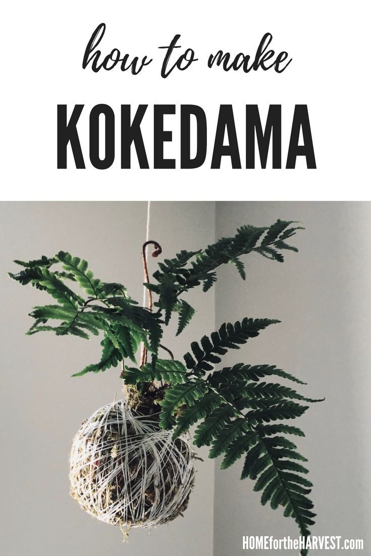 Kokedama moss ball string gardens are easy to make at home with regular potting soil and moss. Here's how to make your own DIY kokedama hanging garden for your houseplant collection.