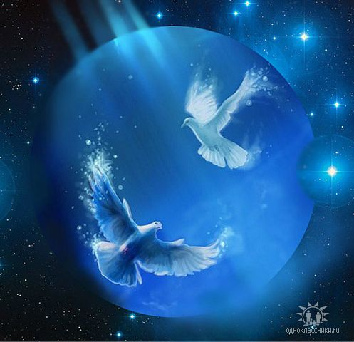 Анимация голубь летит в небе