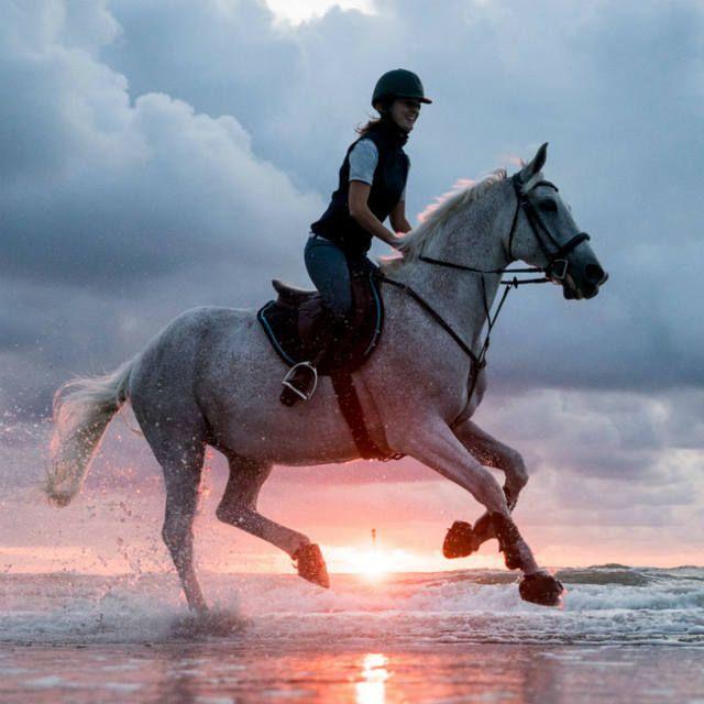 Pourquoi L Equitation Equitation Cheval Gris Fond Ecran Cheval