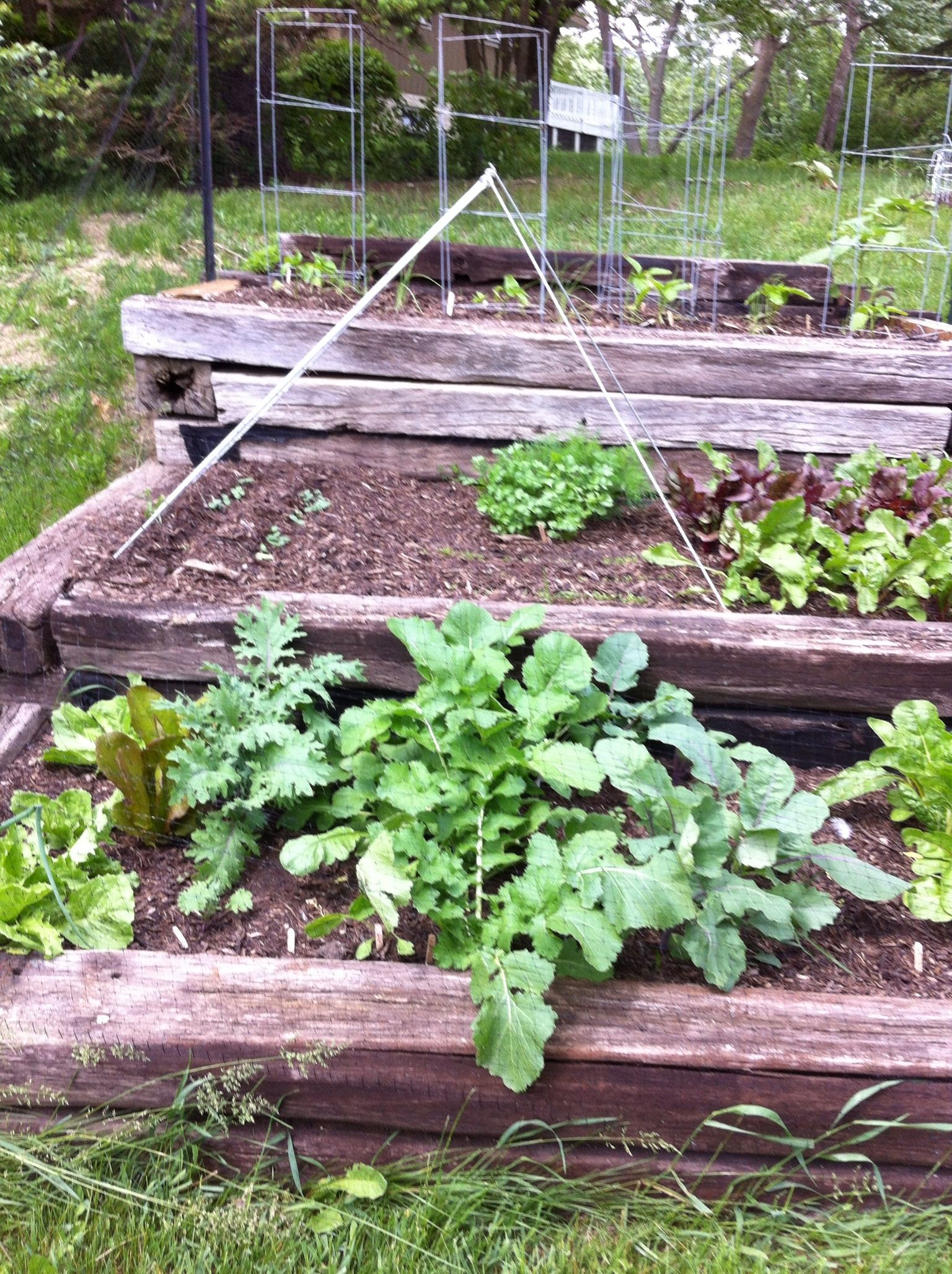 My Back To Eden Garden Working Very Well Garden Plants Eden
