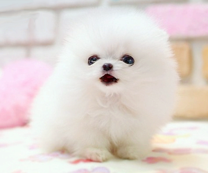 Dog Cute And Puppy Image Cute White Dogs Cute Baby Puppies Baby Dogs