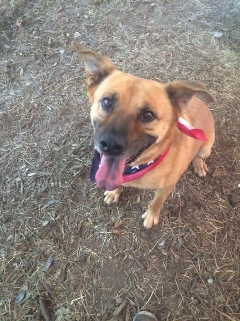 Adopt Olivia on Dogs, Rescue dogs, Black mouth cur