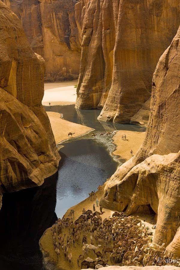 Un oasis en el desierto dando vida y bellza al lugar más inhóspito