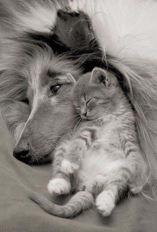 Mon Nez, Mon Chat, L'Amour Et... Moi