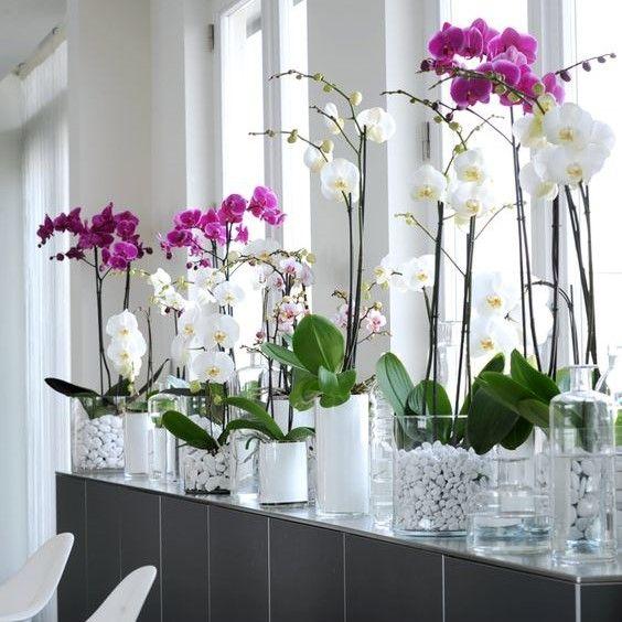 Diy Pour Arroser Ses Plantes En Voyage Culture Des Orchidees