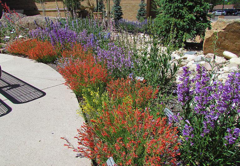 Tough Plants for Wyoming Gardeners | Yard - Landscape Ideas ...
