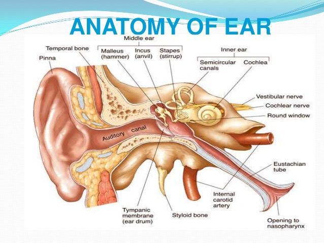 Pin by Sweet Curiosities on ENT ears nose throat | Pinterest
