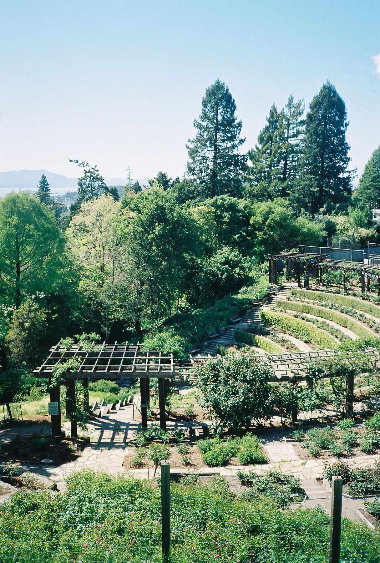 Rose Garden Berkeley Ca Photo Location San Francisco Bay Area California Dreaming