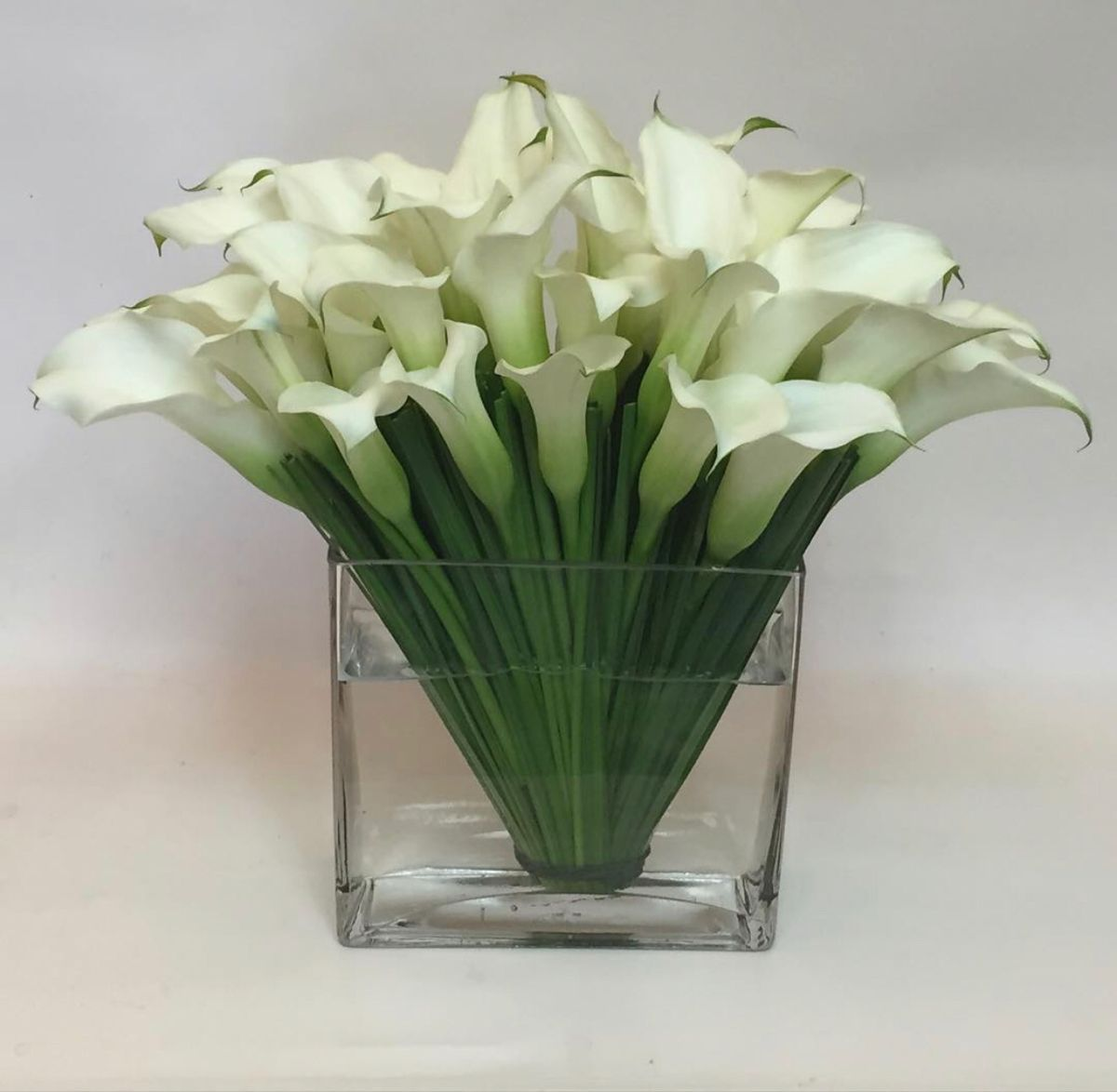 White Mini Calla In 2020 Mini Calla Lilies Calla Lily Wholesale Fresh Flowers