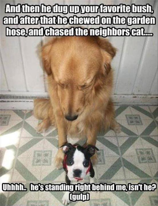 Download Funny Canine Adorable Dog - 872330738b5784995e08574fcd7e7e07  Graphic_469497  .jpg
