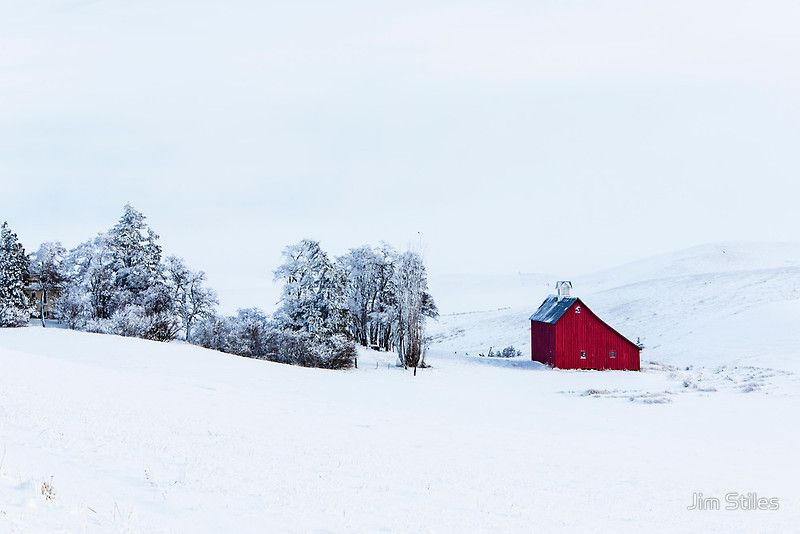 Stiles Christmas Tree Farm 2020 Winter in The Palouse ' Greeting Card by Jim Stiles in 2020