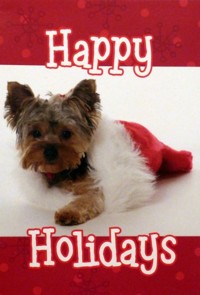 10 YORKSHIRE TERRIER YORKIE inside Santa hat Christmas cards ...