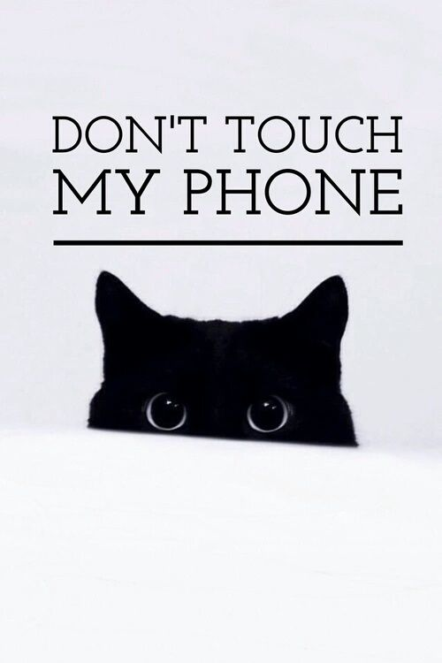 cat, phone, and wallpaper image