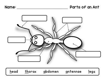 image result for label ant body parts
