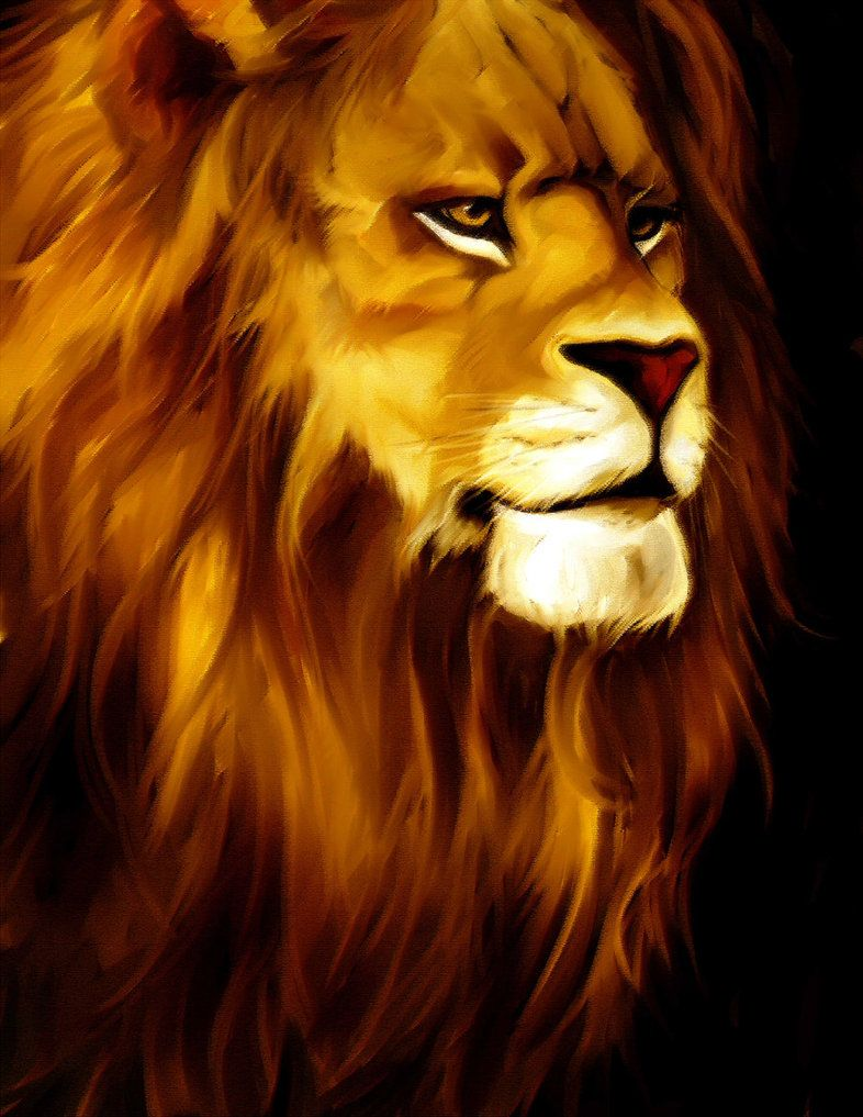 lion drawing color google search