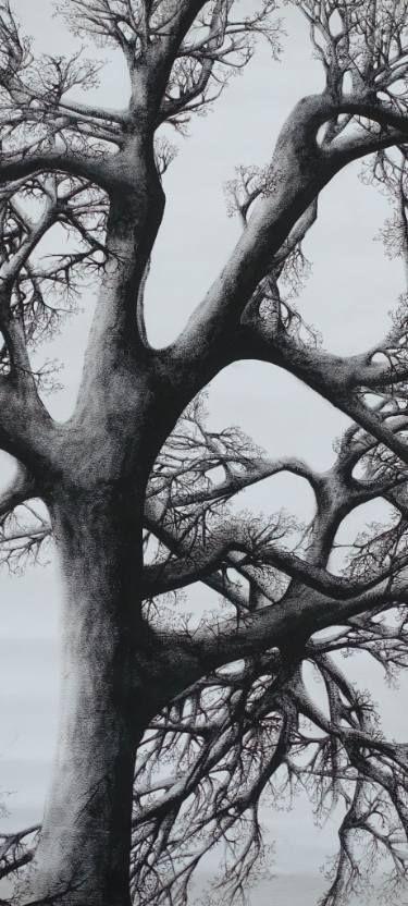 Tree - Declination X