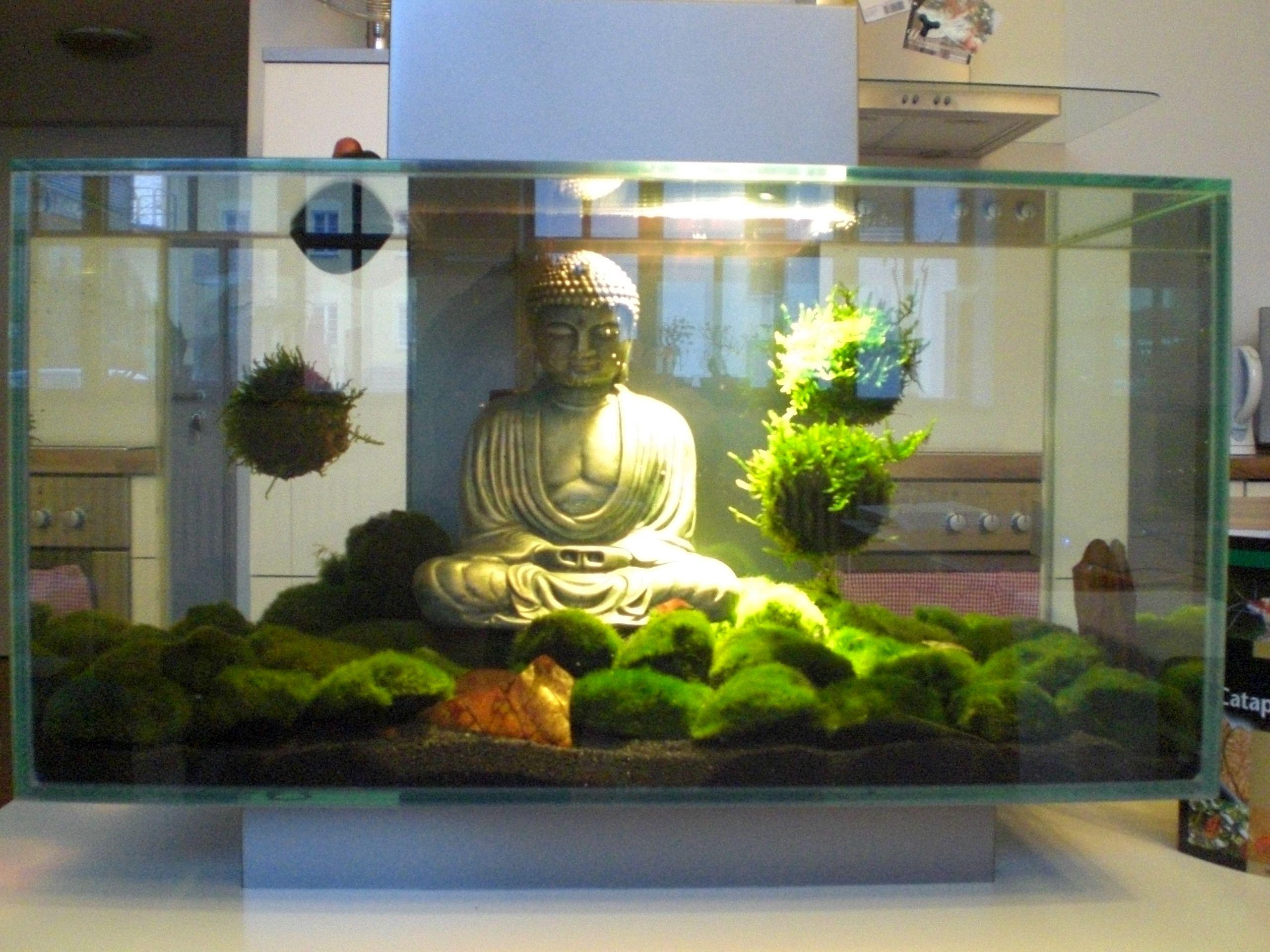 buddha moss balls zen aquarium saltwater aquarium. Black Bedroom Furniture Sets. Home Design Ideas