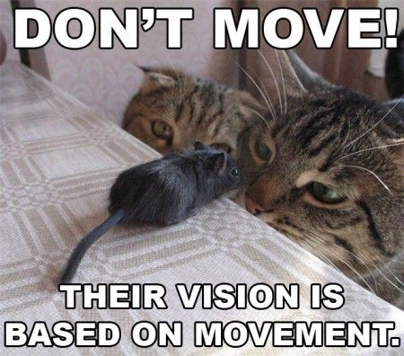 Don't move! cat and mouse