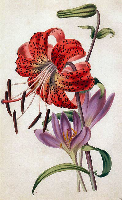 Free Vintage Flowers and Seed Packets Images