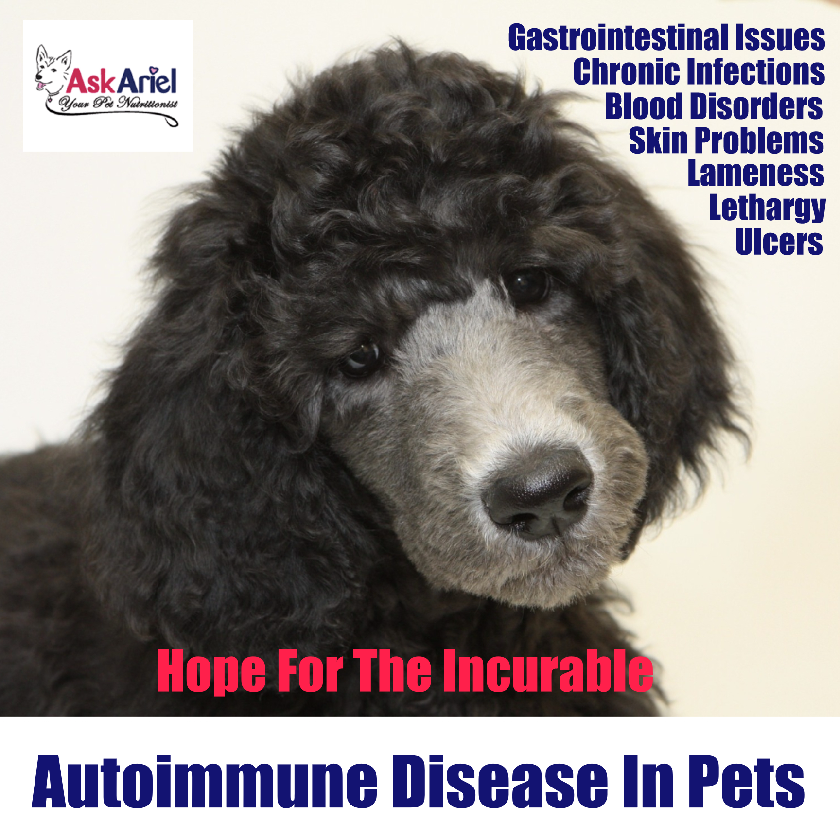 Plant Sterols For Dog & Cats Pet Immune Balance