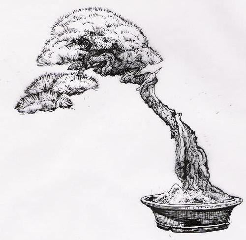 bonsai bunjin