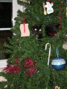 how to keep cats out of the christmas tree furry friday pinterest christmas cats cats and. Black Bedroom Furniture Sets. Home Design Ideas