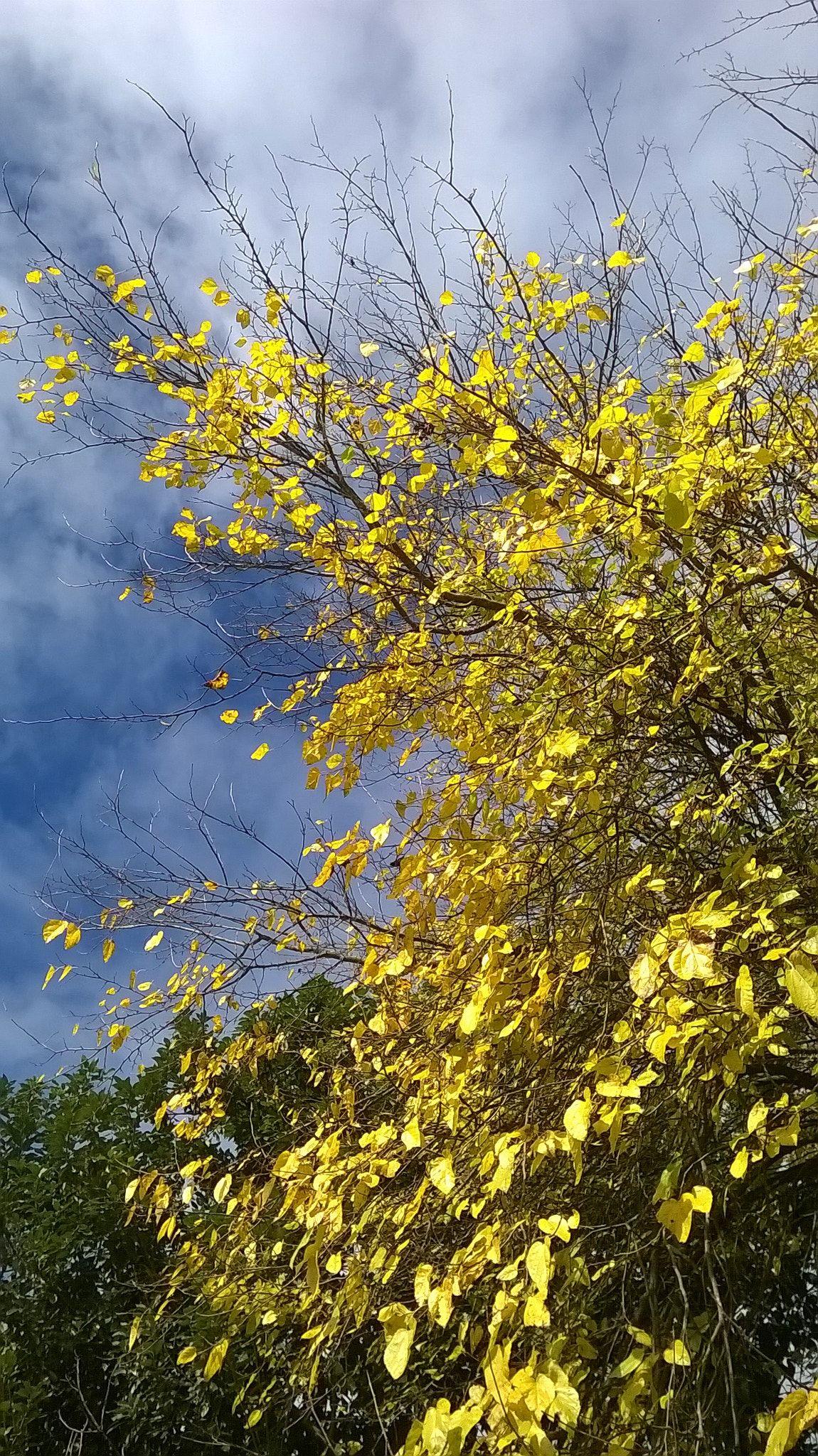 otoño © ontzia