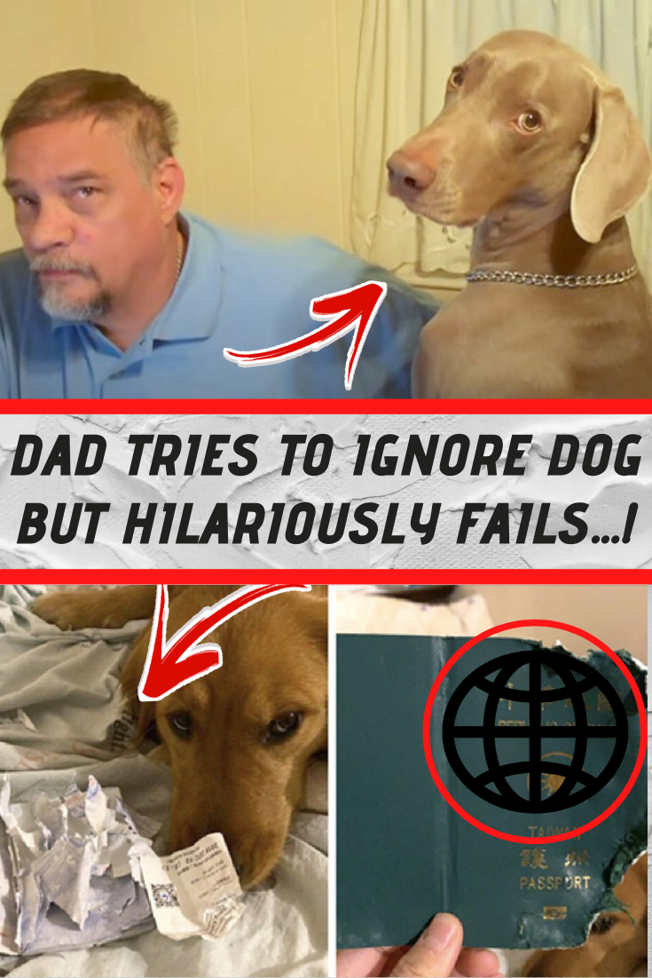 Dad Hilariously Fails At Ignoring Dog Dads Dogs Lol